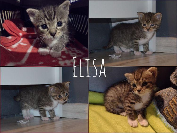 elisa_swd