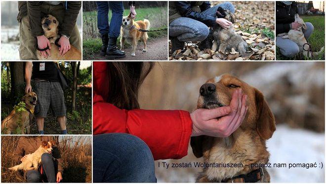 Wodzisławskie koty i psy: zostań wolontariuszem!, Facebook - Wodzisławskie psy i koty
