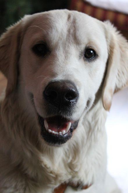 Uchwała Rady Miejskiej Wodzisławia Śląskiego o obowiązkowym znakowania psów trafiła do Wojewódzkiego Sądu Administracyjnego w Gliwicach