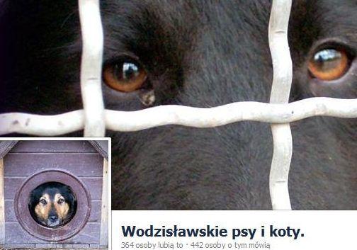 Na pomoc wodzisławskim psom i kotom,